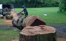 Kent Valley - Tree Surgery
